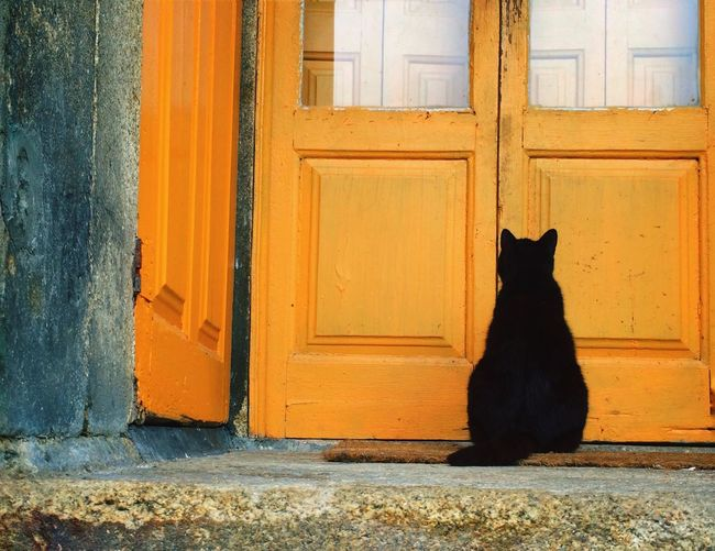 Rear view of black cat by closed yellow doors