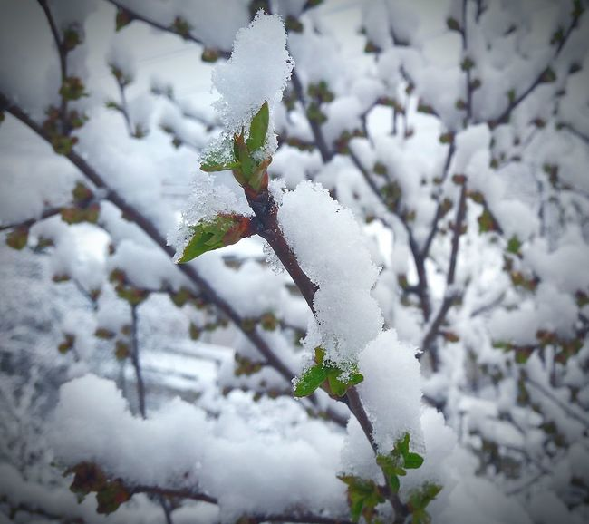 Winter Snow Cold Temperature Nature White Color Frozen Beauty In Nature Ice Tree Outdoors Day No People Turkey Istanbul Beauty In Nature EyeEm Gallery Popular Photos My Photography Eyeemphoto EyeEmBestPics EyeEm Best Shots First Eyeem Photo My Favorite Photo EyeEmPaid Looking At Camera