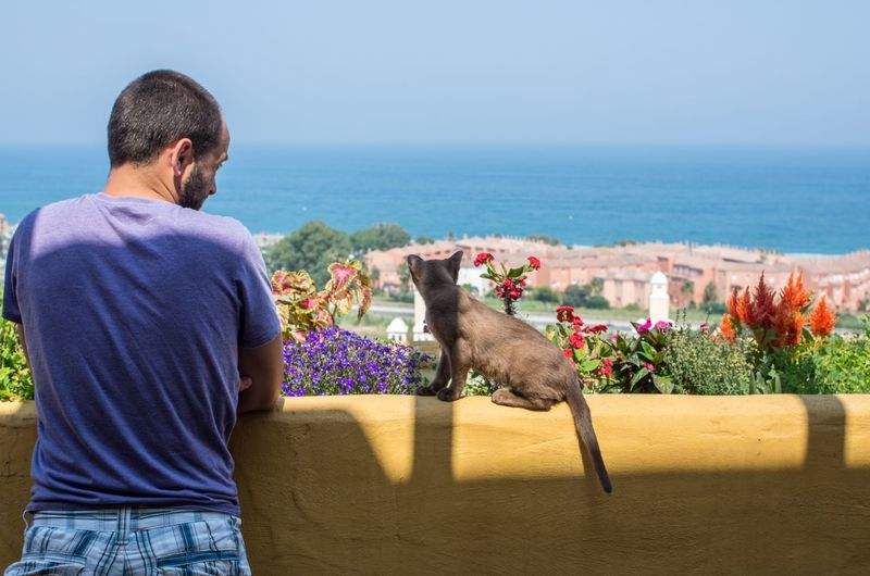 Blue Brown Burmese Cat Casual Clothing Cat Day Domestic Animals Friends Horizon Over Water Kitty Looking At View Man Pets Plants Rear View Sea Sitting Sky Terrace View