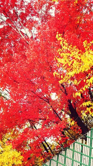 Fall Colors Fall_collection