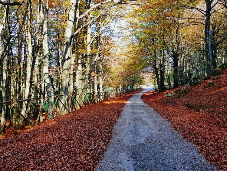 colori e natura Nature Photography Paesaggio Italy🇮🇹 Monte Cucco Bosco Autunn Autumn colors Autunno Autumn Colors Colori Landscape Paesaggio Autunno🍁🍁🍁 Foglieautunnali Fogliediautunno Foglierosse Sentiero Low Section Road Textured  Tree Close-up Sky EyeEmNewHere This Is Strength