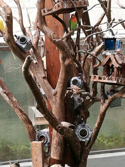 Teapot birds