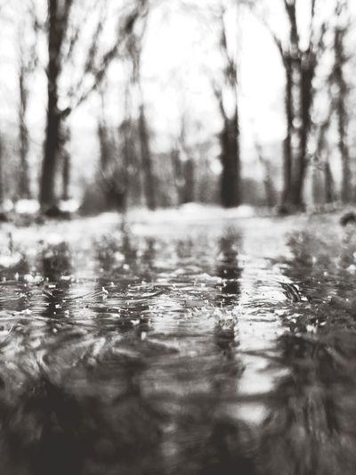 Surface level of wet land in rainy season