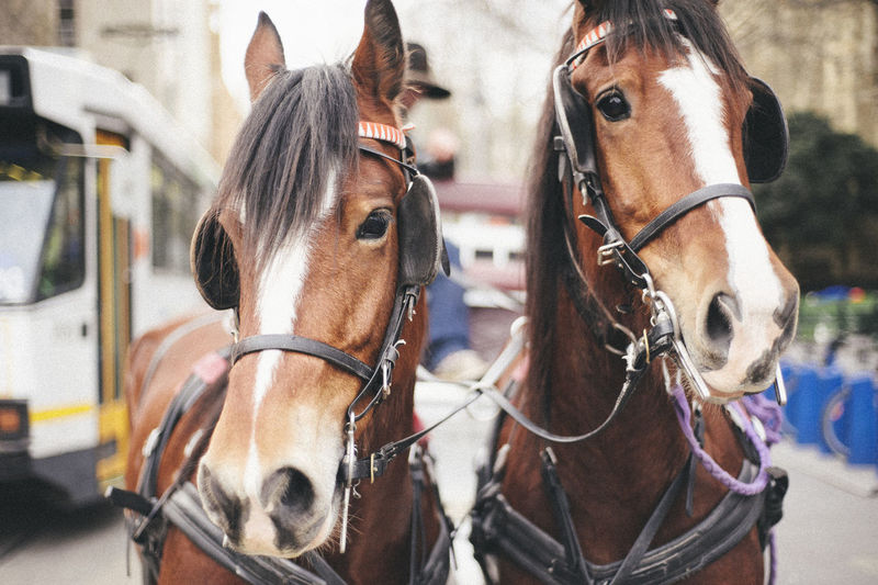 Close-up of horses on street