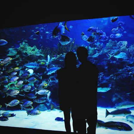 People Together Couple You And Me Aquarium Aquatic Aquaria Klcc As Beautiful As It Gets like Wallpaper Relax Time  Fish Fish Tank Enjoyable Moment Live Wallpaper Backlight Backlight And Shadows Hidden Gems