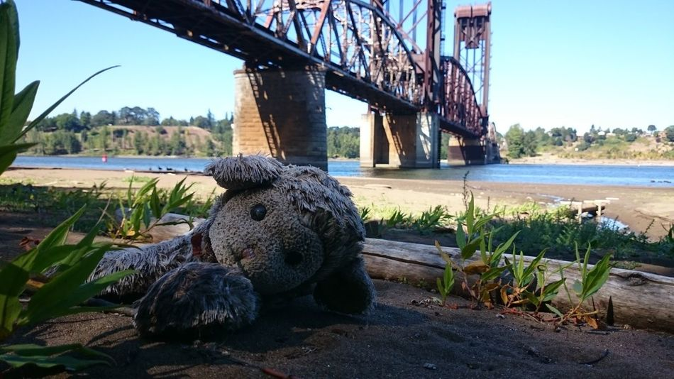 No Filter No Edit/no Filter No Edit Abandoned Things Abandoned Toys Eyeem Abandonment Stuffed Animals Railroad Bridge Bridges Light And Shadow Portland Portland Oregon Willamette River