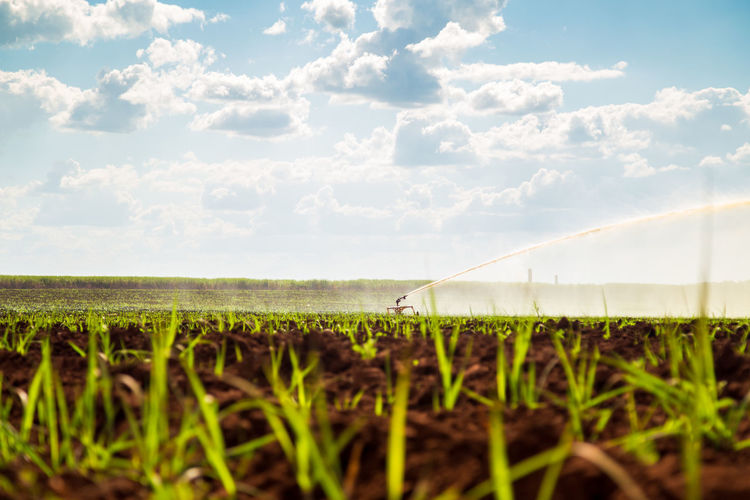 Agriculture Beauty In Nature Cloud - Sky Crop  Day Environment Farm Field Green Color Growth Irrigation Land Landscape Nature No People Outdoors Plant Plantation Rural Scene Scenics - Nature Sky Sugar Cane Tranquil Scene Tranquility