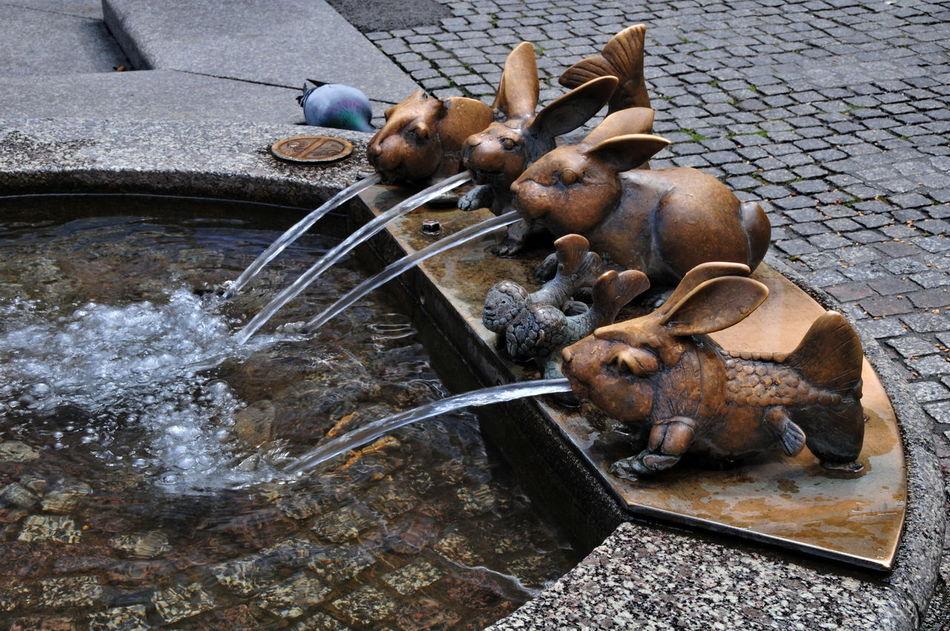 rabbits Animal Themes Day Fountain High Angle View Mammal No People Outdoors Rabbit Fountain Rabbits