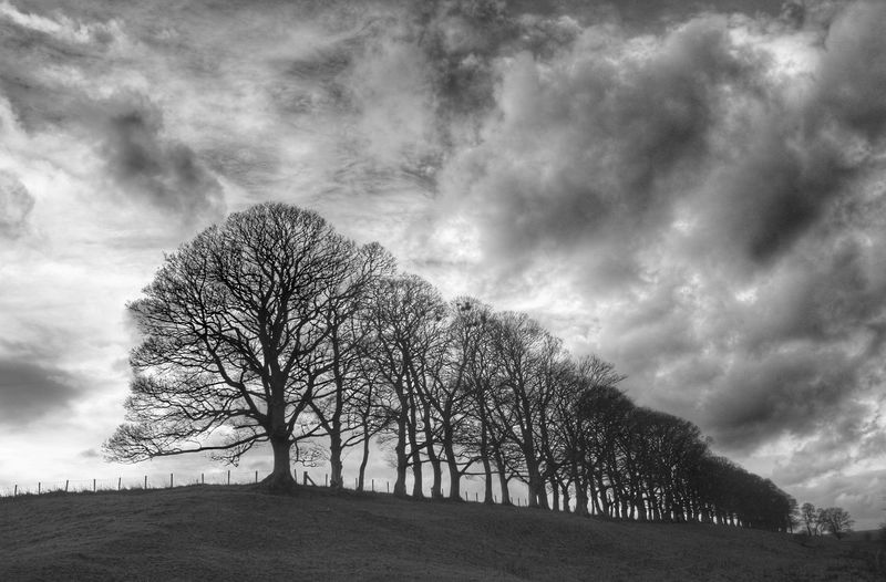 Ancroft trees Taking Photos Check This Out Northumberland Berwickupontweed Sunset #sun #clouds #skylovers #sky #nature #beautifulinnature #naturalbeauty #photography #landscape Greatplague Eye4photography, Field, Photography, Hdr,  Taking Photos