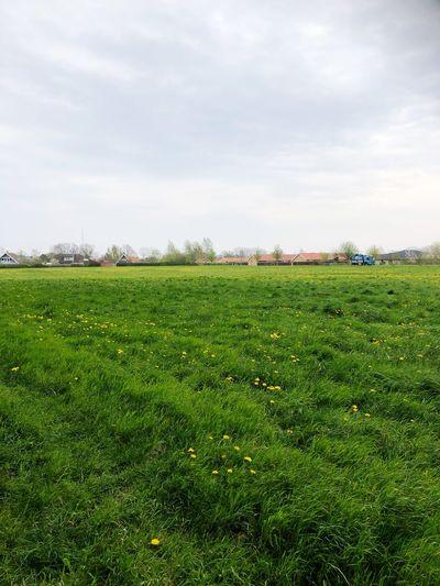 Plant Sky Green