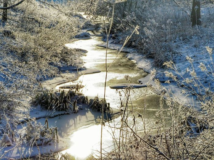Winter Shades Of Winter Winter Trees Naturephotography Nature Beauty Iced Winter Nature Day Frozen Nature Iced Water Iced River ❄ Iced River Cold Weather Cold Temperature Beautiful Nature Frozen Plant Snow Covered Day Nature Outdoors Full Frame No People Sunlight Shadow Water Beauty In Nature