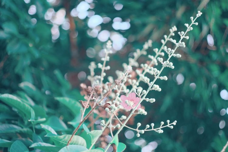Flower Collection Flowers EyeEmNewHere Nature Long Goodbye