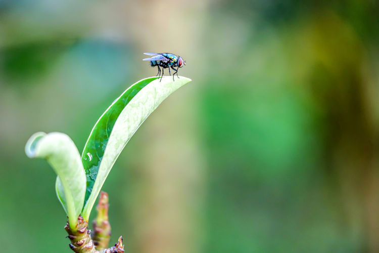 fresh morning Fly Leaf Flower Damselfly Insect Close-up Plant Green Color Mosquito Dragonfly Animal Wing Arthropod Jumping Spider Invertebrate Pest Moth Animal Antenna Ladybug Butterfly - Insect Grasshopper Wild Animal Chachoengsao Flapping Spider Mating Praying Mantis