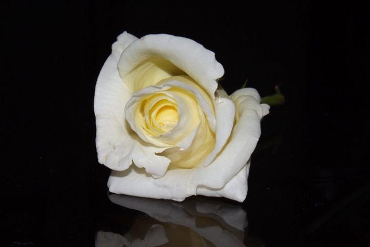 Shīrāz Green Flowers Is Amazing Flower Neyrizcity Picnic Iran Shiraz, Park ایران وطنم Fars Neyriz 2016 Taking Photos First Eyeem Photo Am فارس Amazing View ایران نی ریز وطنم پاره تنم Love ♥
