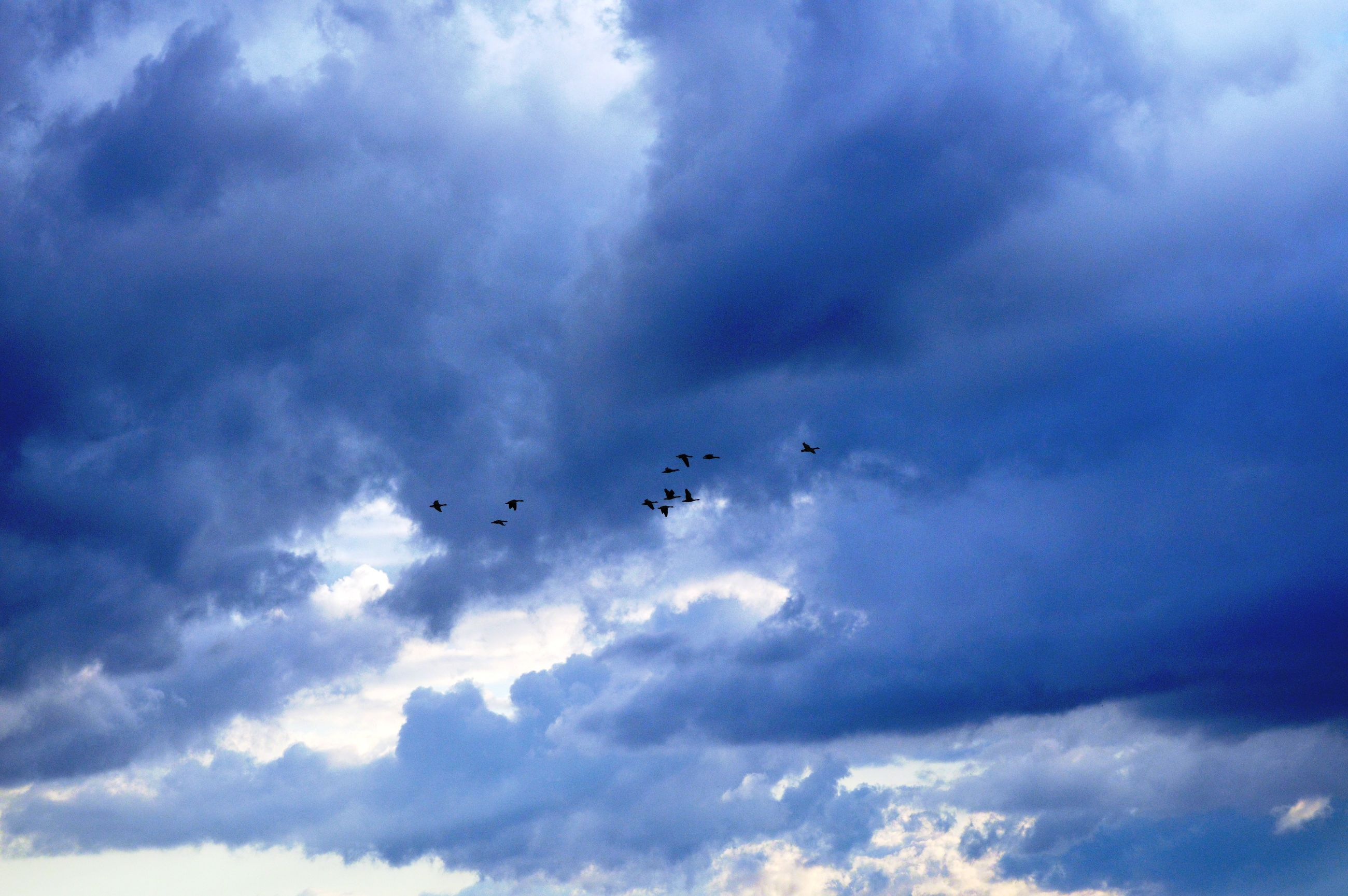 flying, sky, low angle view, cloud - sky, mid-air, cloudy, transportation, air vehicle, airplane, mode of transport, nature, cloud, on the move, beauty in nature, bird, animal themes, blue, motion, silhouette