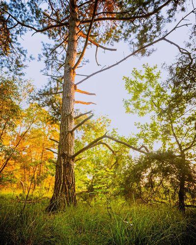 Tree Wilderness