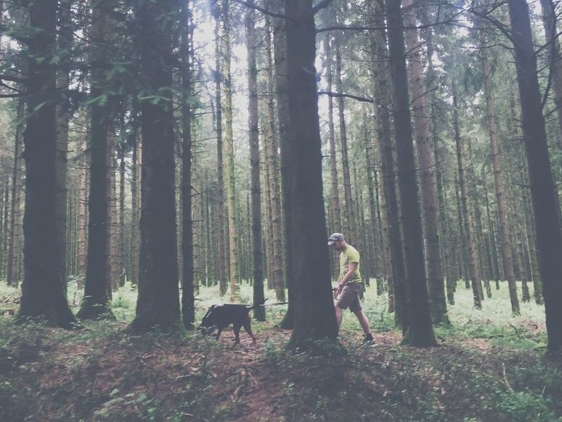Forest Forestwalk France Grey Green Color Dog Hunter Man Go For A Walk Vogesen The Great Outdoors - 2018 EyeEm Awards The Photojournalist - 2018 EyeEm Awards The Traveler - 2018 EyeEm Awards