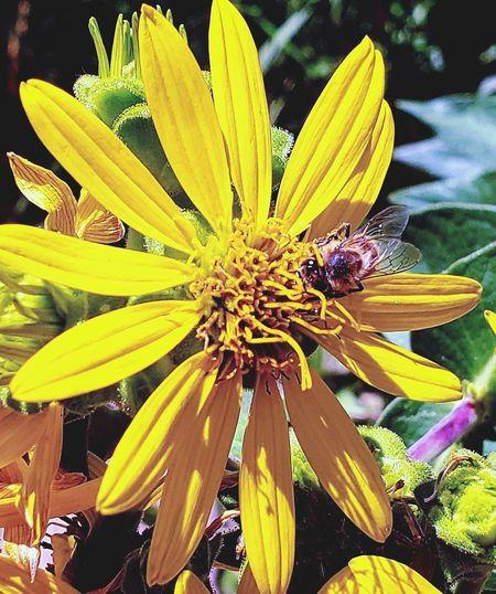 Busy Bee Flower