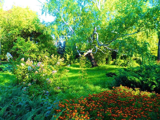 Growth Tree Green Color Nature Real People Field Beauty In Nature Outdoors Grass Day Men Leisure Activity Women Flower Plant Tranquility One Person Tranquil Scene Landscape Scenics Nature Wonderful Wonderful Place Summertime Summer Views