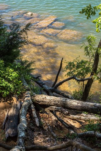 High angle view of driftwood in forest