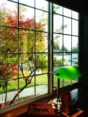 A window into Fall Window Tree Indoors  Window Frame Home Interior Plant Nature Sun No People Day Domestic Room Bedroom Horizontal