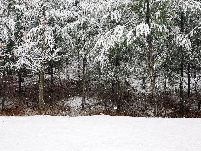 Snow Tree Cold