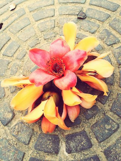 No People Flower Outdoors Frangipani Day Close-up Nature Beauty In Nature Flower Head