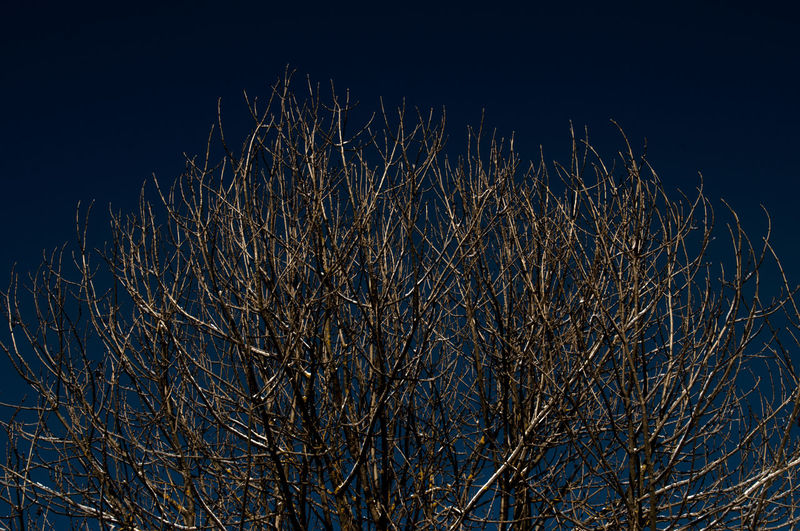 trees photographed from below, with detail of the sky and the leaves Natura Natural Light Tree From Below Trees Alberi Albero Trees And Nature Trees And Sky Trees Branches Against Blue Sky Treescollection EyeEmNewHere