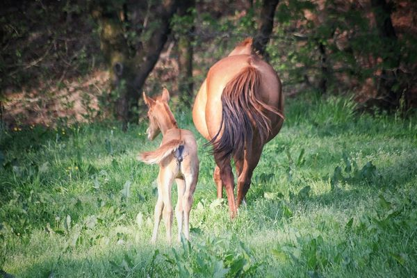 Caballos Potro Naturaleza Animales Adorables Animal Themes Domestic Animals Nature No People Horses Group Of Animals EyeEmNewHere Beauty In Nature