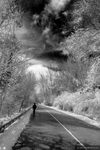 Título: Pensamientos fríos. Autor: Marcus Populus. Cámara: DMC Panasonic TX60 Lugar: Rascafría, Madrid. Punto F: f/3.3 Tiempo de exposición: 1/2000s Velocidad ISO: 100 Distancia focal: 4mm Beauty In Nature Nature One Person Road Tree Walking Winter