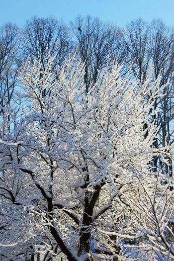 Tree Plant Bare Tree No People Winter Beauty In Nature Branch Cold Temperature Day Sky Snow Nature Scenics - Nature Tranquility Outdoors White Color Growth Full Frame