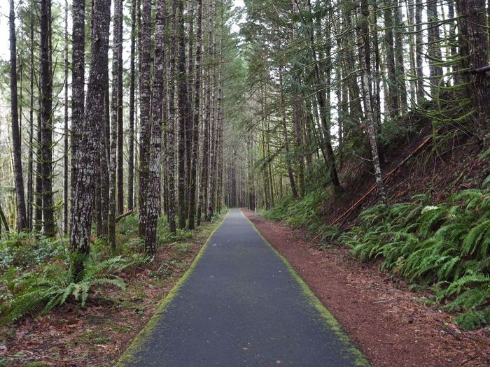 On the Banks-Vernonia Trail. Portland Oregon Trail Path Hiking PNW PNWonderland First Eyeem Photo