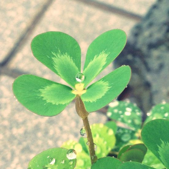 Day Greenleaf Waterclover Leaf Nature Green Color Rain Rainy Days
