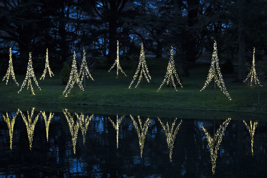 Reflections of Christmas. Best Christmas Lights Christmas Around The World Christmastime Christmas Tree Christmas Lights Christmas Decorations Christmas LongwoodGardens EyeEm Best Shots Showcase: December Check This Out Bestoftheday