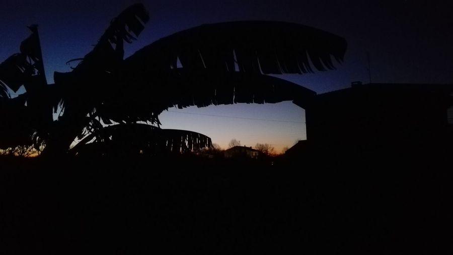 Silhouette Night Sky Outdoors Dark No People Nature