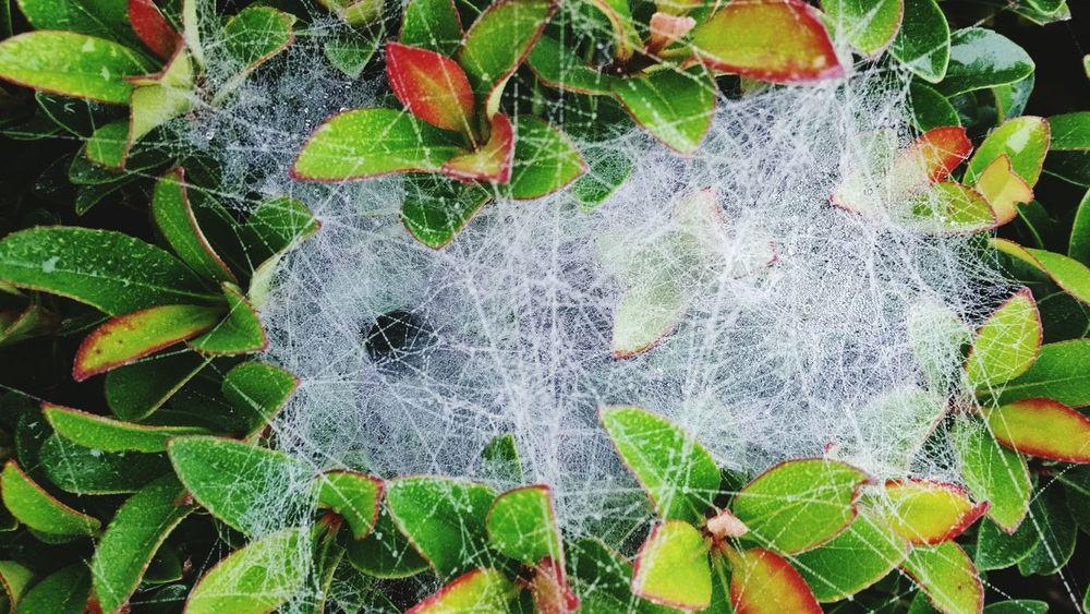 Leaves Circles Close-up Nature Photography Nature_collection Nature Rain_collection Rain Drops Rain Raindrops Raindrops On Spider Web Spiderweb