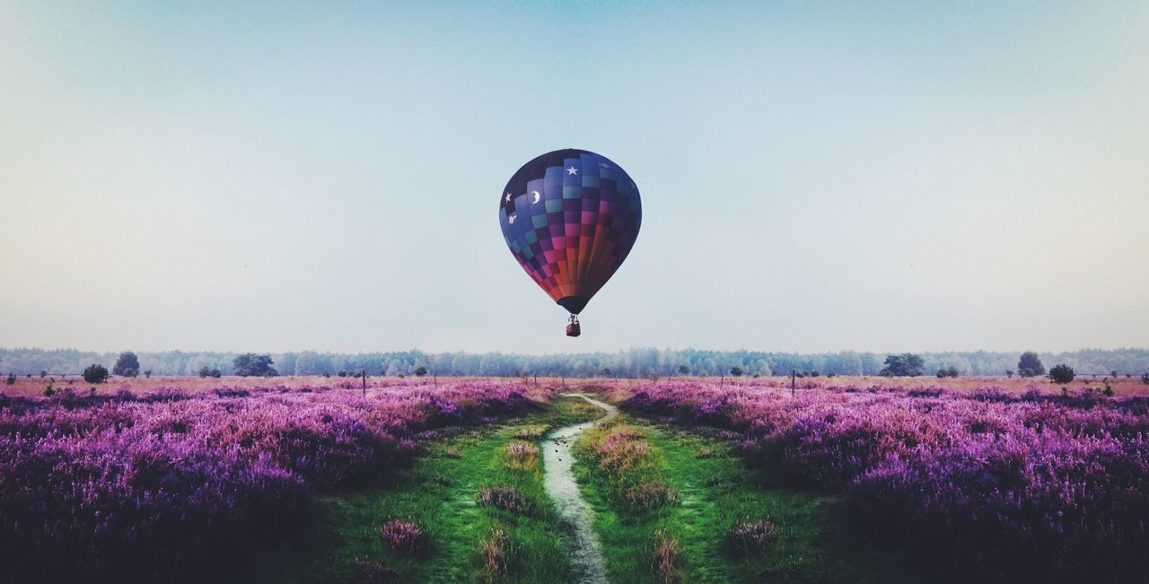 Hot air balloon flying over lavender field
