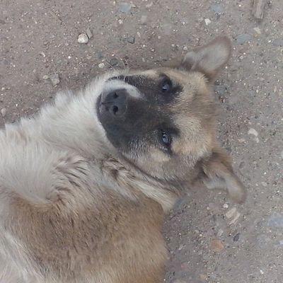 Тимон кайфует тимон кайф СобакаДругЧеловека тимон пес малыш щенок mood instadog dog