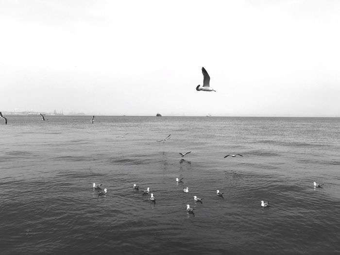 View of birds in sea