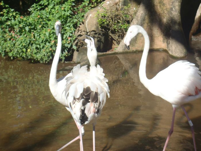 Flamingo,bird, Nature Day Animal Wildlife Travel Destinations ,exotic