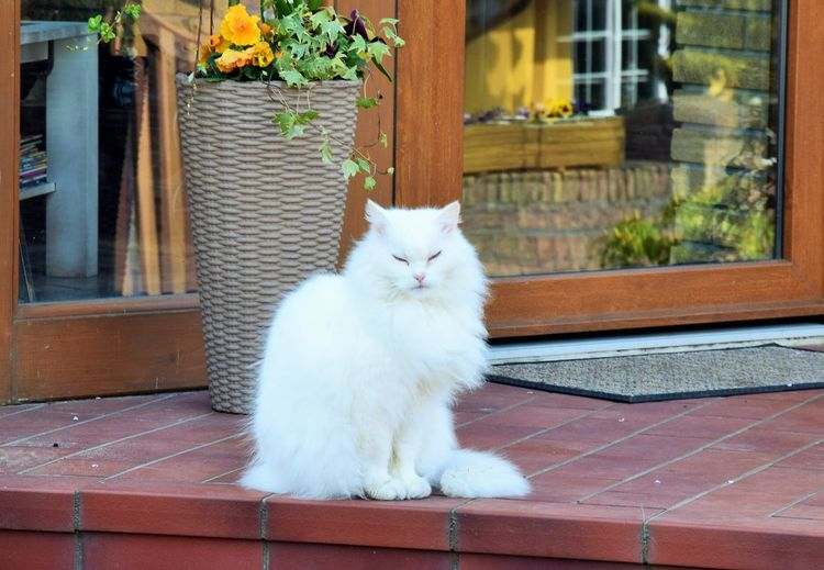 ...nun gut; beobachtet ist zuviel gesagt. Domestic Pets Domestic Animals Mammal Animal Themes One Animal Animal Cat Vertebrate Feline Domestic Cat Window Day Plant No People Sitting Looking Portrait Glass - Material Potted Plant Outdoors Whisker