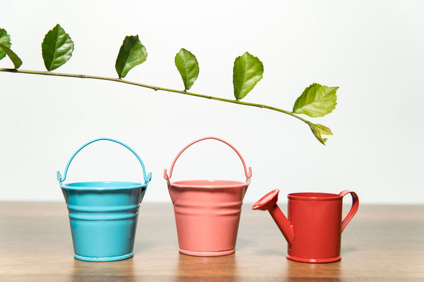 Three buckets of water and green leaf Buckets Nature Bucket Of Water Close-up Day Freshness Green Color Green Leaf Indoors  Leaf Nature No People Plant Red Shower Bucket Steeple Table