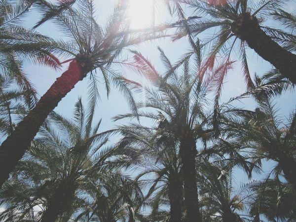 🌴🌴🌴 Palmtrees Jerusalem Israel First Eyeem Photo