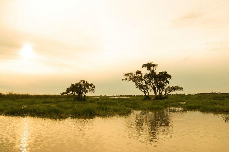 Wetland , Sun ,Warm,Tree