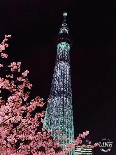 Cherry tree and Tokyo sky tree Hello World EyeEmBestPics Tokyo Twilight Sky Sky And Trees Tokyo Sky Tree Cherry Blossoms Cherry Night Photography