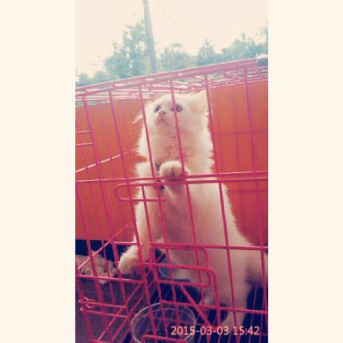 My pet molly 😚