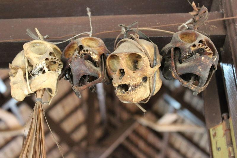Mentawai Tribe House DecorationEyeEmNewHere EyeEm Selects Hanging Close-up No People Indoors  Bone  Skull Ancient Civilization Mentawai Weird Stuff House Decoration