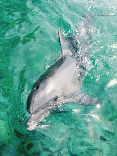 Sea Red Sea Eilat Israel Dolphin Dolphins Dolphin Watching  Animals Dolphinlover Animal Animal Photography Dolphinswim Relaxing Love Dolphins Eilat Summer Swimming Green Green Water Israel_only Israel_best Red Sea Diving Red Sea,blue Water Eilat Dolphin Reef Israel DolphinShow Dolphin Watching
