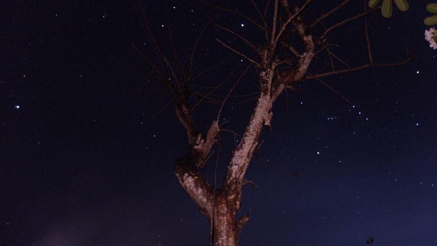 Night tree Long
