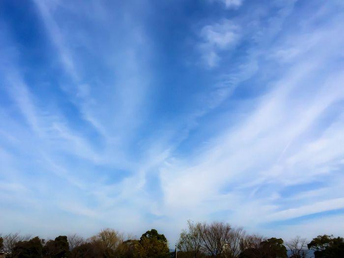 Sky Tree Cloud